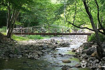 대나무 숲에서 즐기는 캠핑여행_가마골계곡.jpg