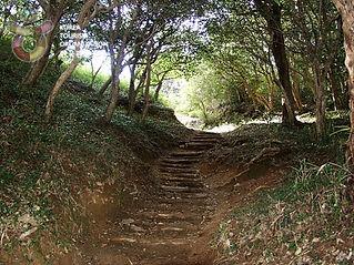 백운산 숲에서 즐기는 치유의 캠핑여행_광양 옥룡사 동백나무숲.jpg