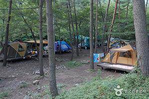 해송숲에서 즐기는 캠핑여행_국립 희리산해송자연휴양림.jpg
