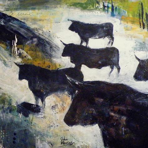 Transhumance des taureaux