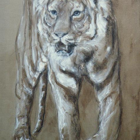 Grand tigre marchant