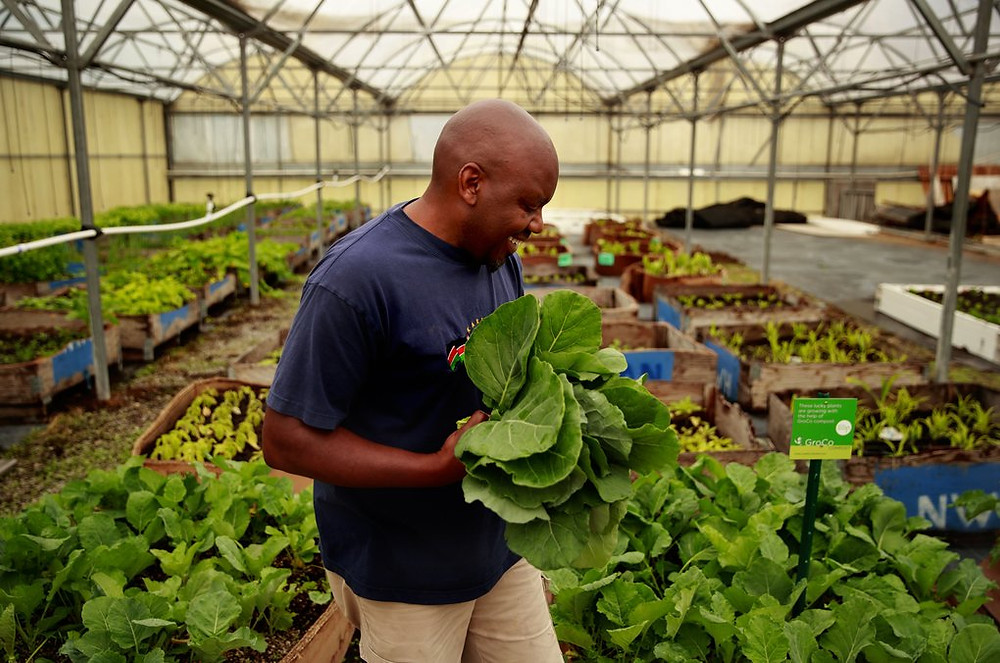 David Bulindah, inside the Wakulima Farmers Greenhouse Project in Auburn