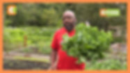 | SMART FARM | Kenyan farming vegetables in the USA