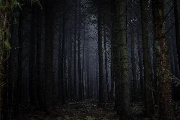 dark forest.jpeg