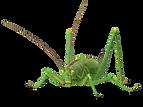 Grasshopper.I02.2k.png