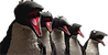Small-Penguins.png