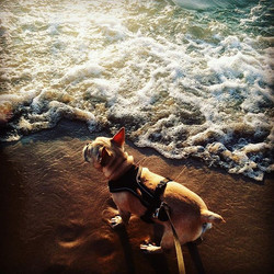 Puppies also enjoy living the #GreatLakes life! If you're enjoying the lake life this weekend be sur