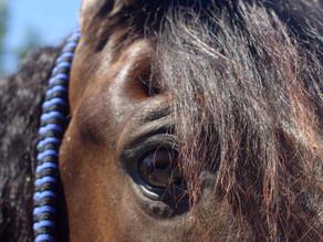 Kan een paard helen?