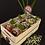 Thumbnail: מארז חברים עם כוסות | Natural 1.5 L