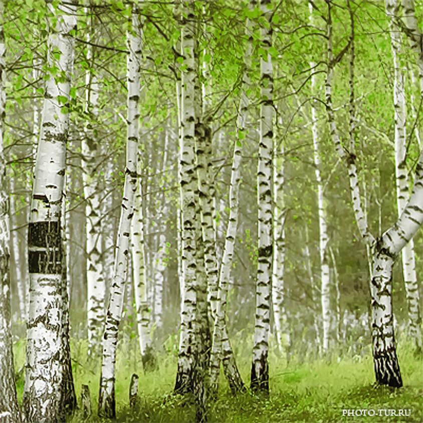 Левитановский лес
