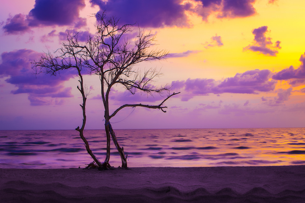 дерево на закате.jpg