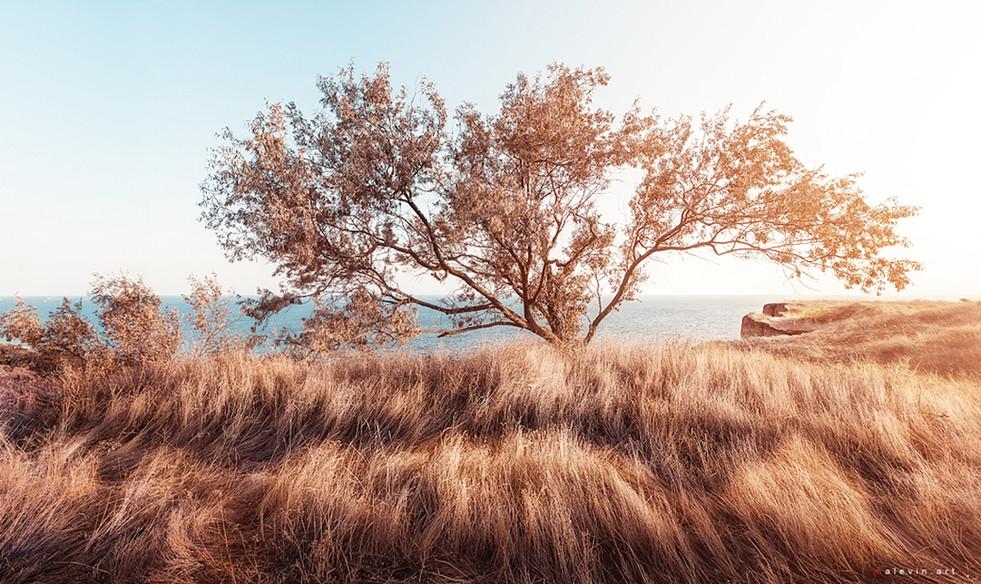 Краснодар-дерево-новая-земля-готово-1100