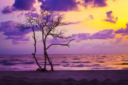 дерево-на-закате