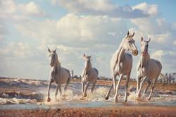 четыре-коня-резкость