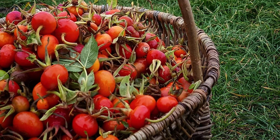 Sunday Sessions - Foraging for Autumn in East Belfast