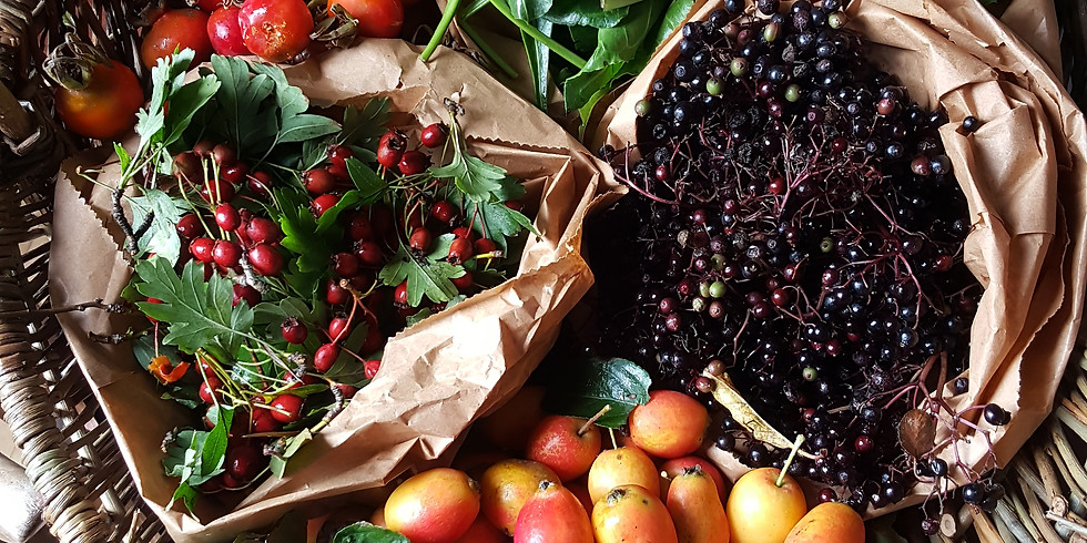 Sunday Sessions - Foraging for Autumn in North Belfast
