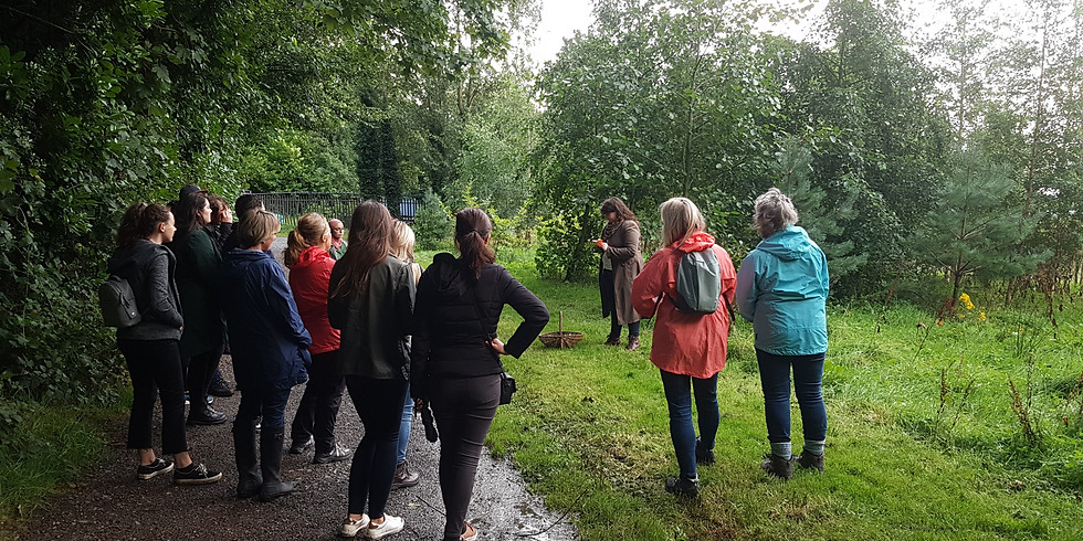 Summer Evenings - Foraging at Ormeau Park