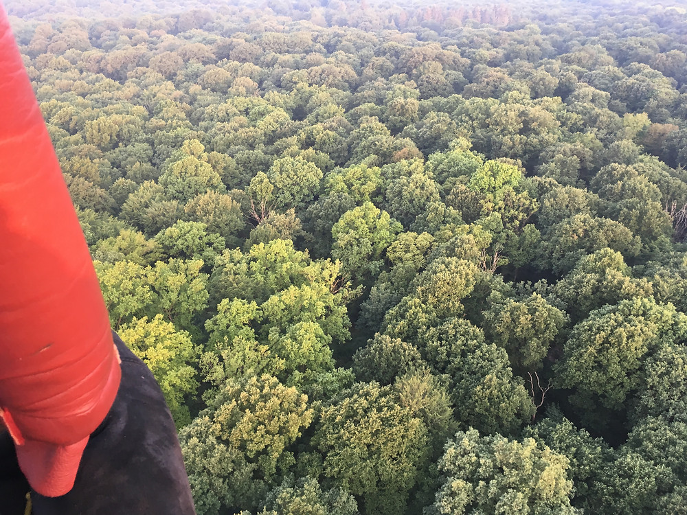 Waldbegang mal anders: mit dem Heißluftballon