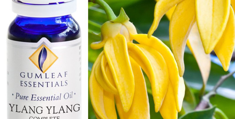 Ylang Ylang (Complete) Essential Oil