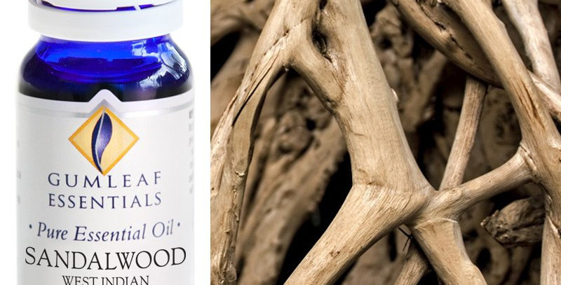 Sandalwood (West Indian) Essential Oil