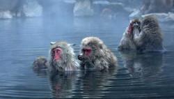 nagano_hot_spring_monkey-2