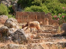 crete-greece_28709