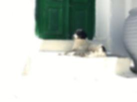 mykonos cane.jpg