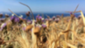 mykonos grano.jpg