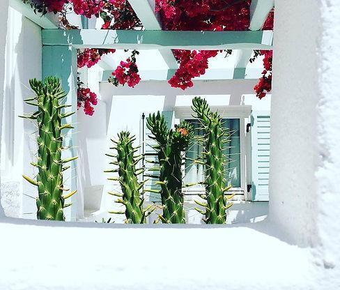 mykonos cactus.jpg