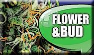 YiLo Flower & Bud