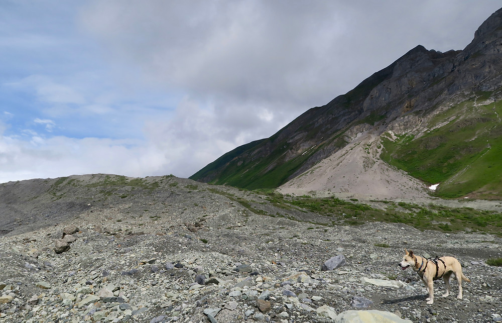 A blond dog stands on rocky ground with a green and gray mountain in the background.