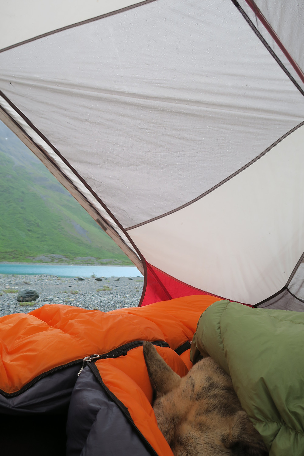 A blond dog is curled up inside a tent under a green quilt and an orange sleeping bag. A bright blue lake is visible in the near distance.