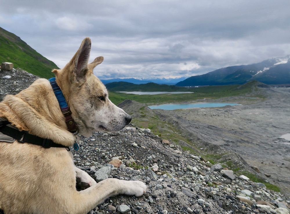 A blond dog with ears sticking up looks out over a ridge leading down to small blue lakes. Blue mountain peaks in the distance and gray clouds overhead.