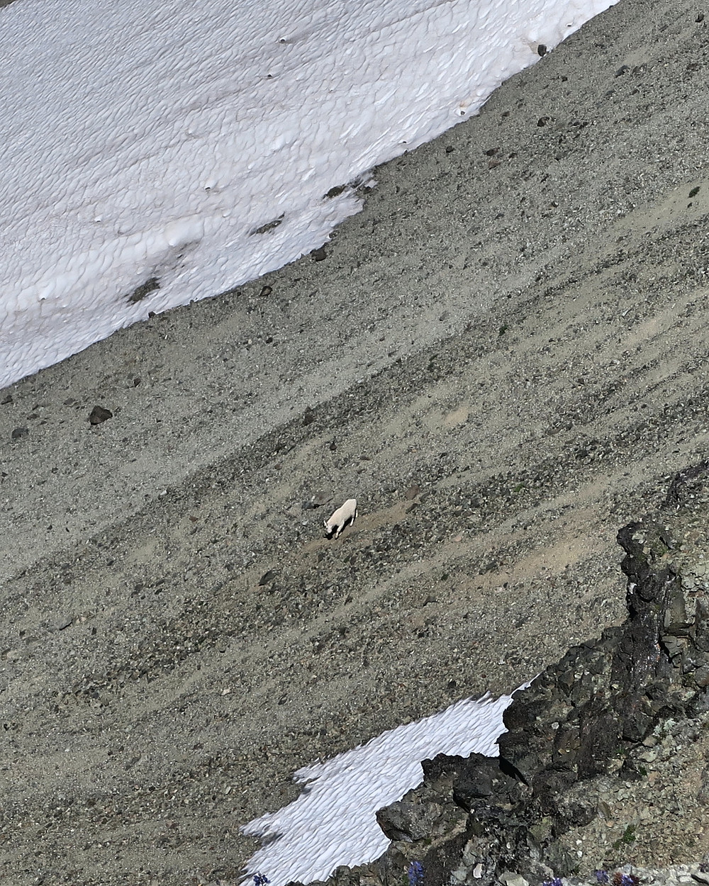 White patches of snow, gray rocks, and a distant dirty white mountain goat.