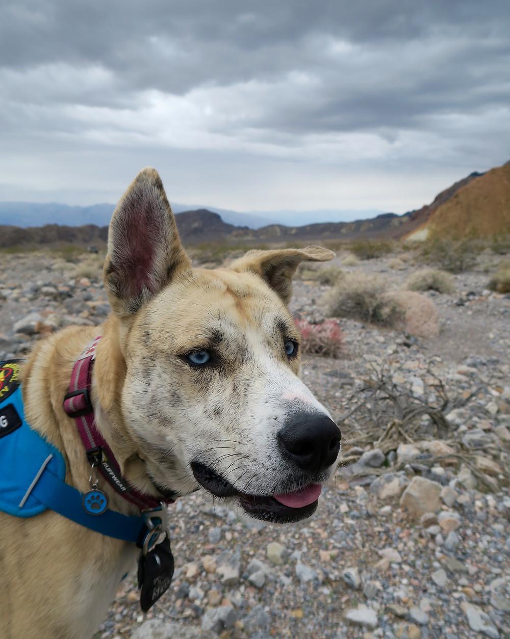 Close up of Elu's alert face, dark clouds overhead. Photo by Tenley Lozano.