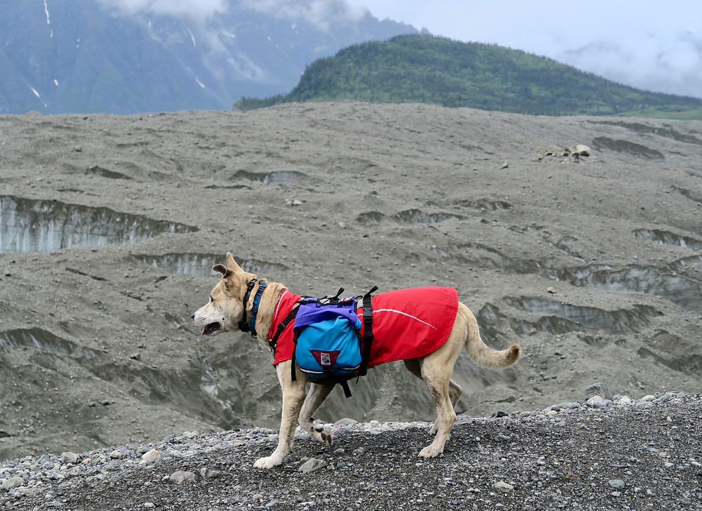 A dog stands on a rocky trail wearing a red coat and blue pack next to a rock-covered glacier.