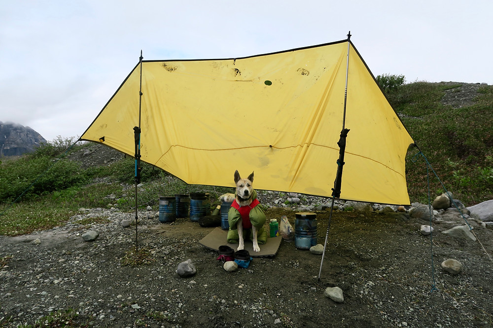 A blond dog wearing a green and red fluffy coat sits under a yellow tarp surrounded by blue bear-proof containers.