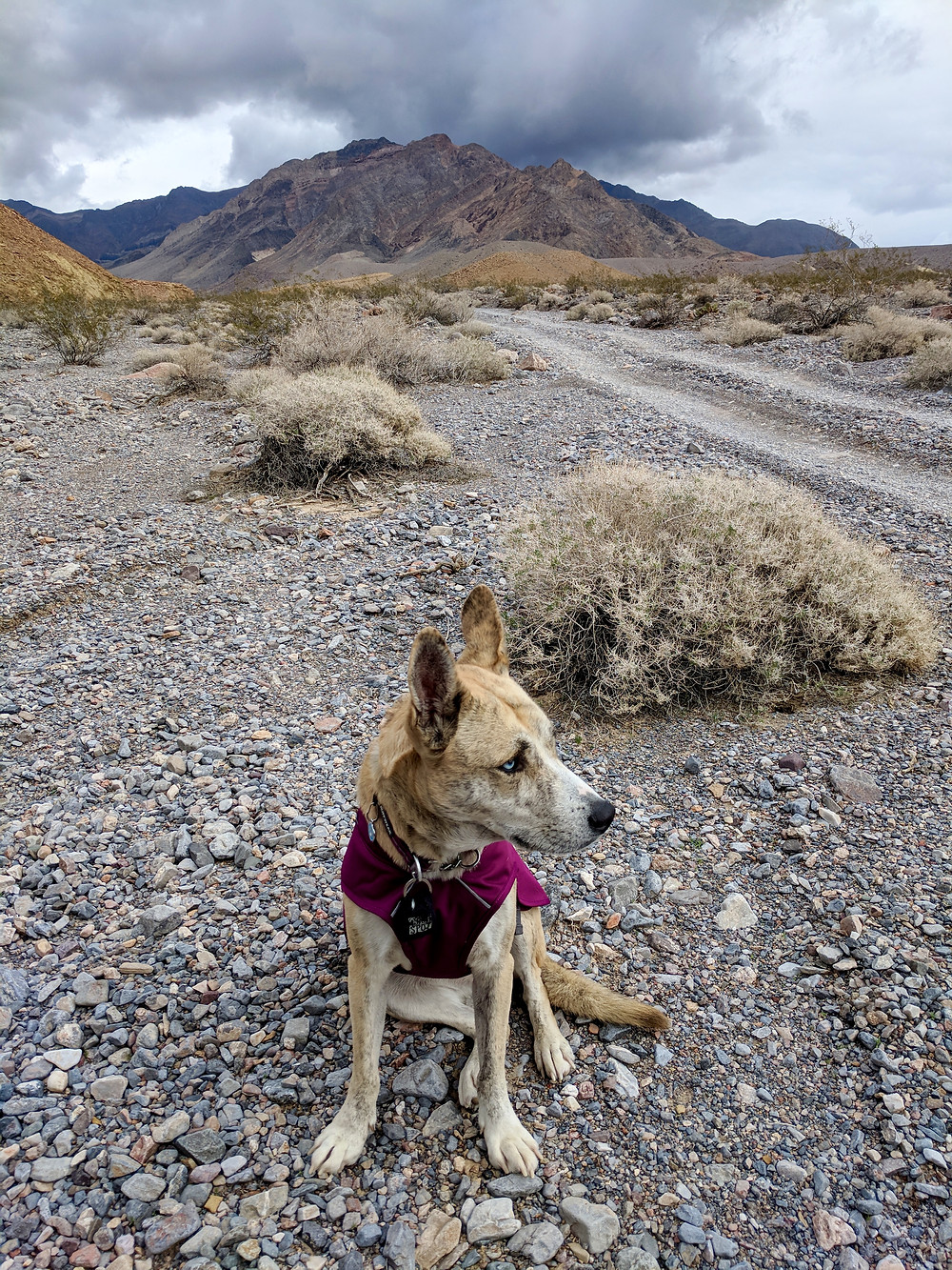 Elu wearing her coat, sitting on rocks in our campsite, next to the road. Photo by Tenley Lozano.