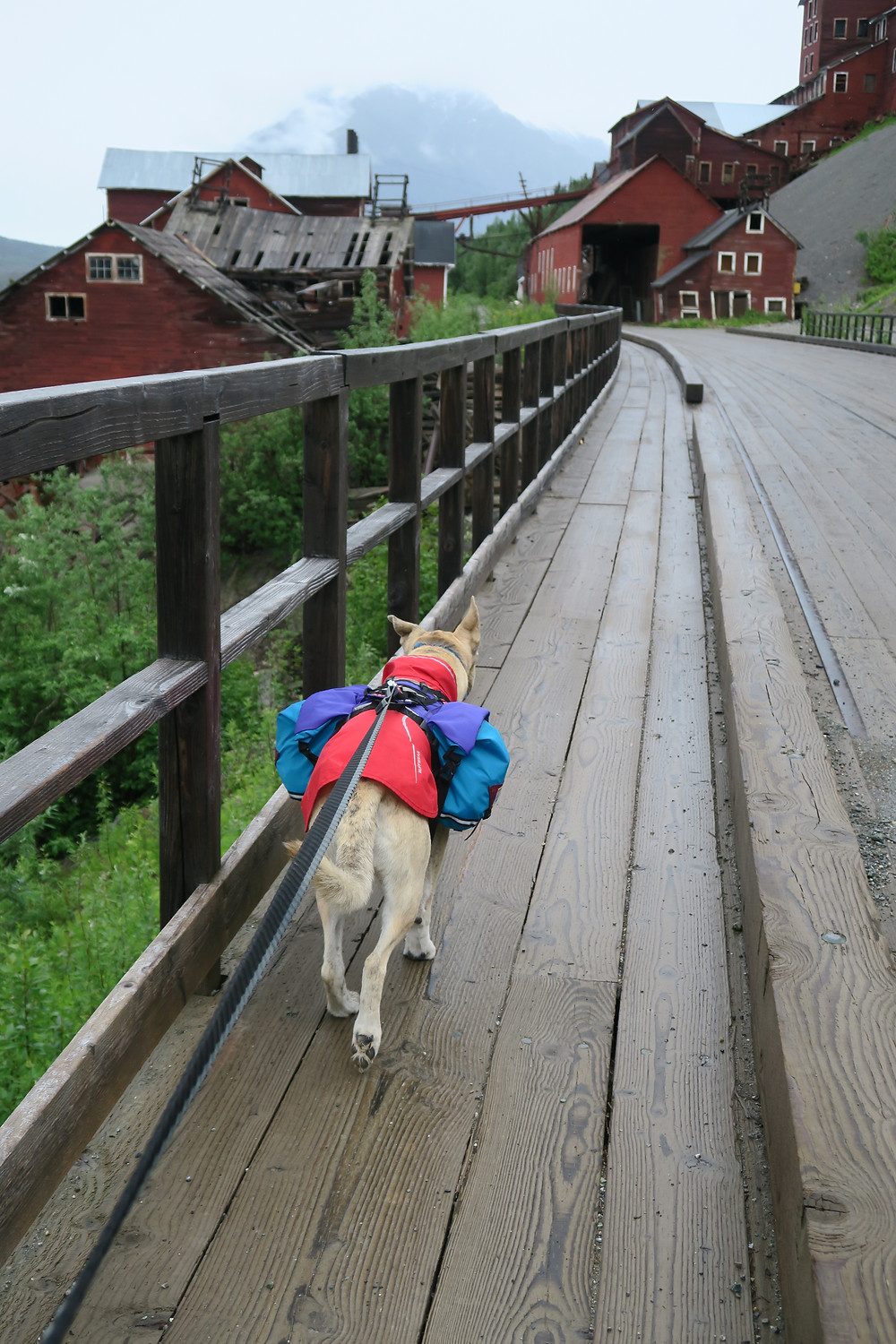 A dog wearing a red coat and blue and purple pack walks over a wooden bridge to an old mining town with red buildings.