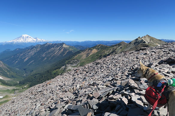Elu on the Pacific Crest Trail in Washington, Mt Rainier in the background.