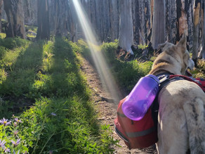 Pacific Crest Trail, Washington (Day 3, August 2016)