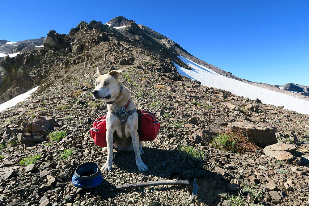 A small blond dog sits on a rocky ridge with an ice ax at her feet.