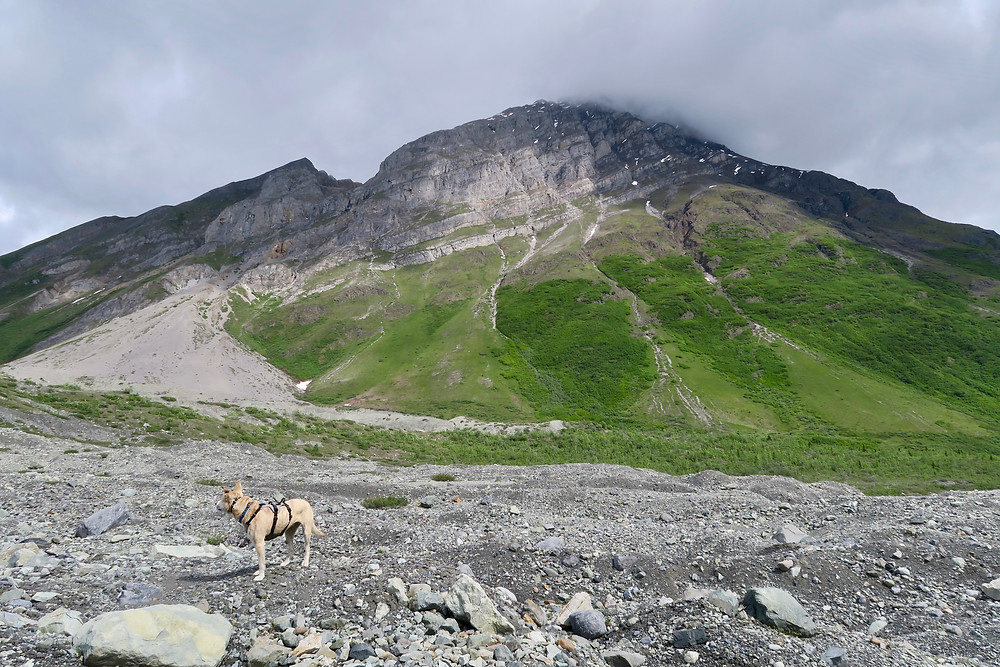 A blond dog stands looking off to the side, a rock and grass-covered mountain peak reaching to the clouds.
