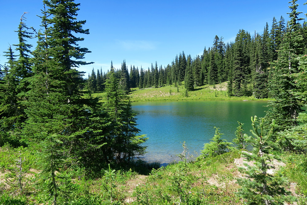 A light blue lake is surrounded by gentle grassy hills and pines.