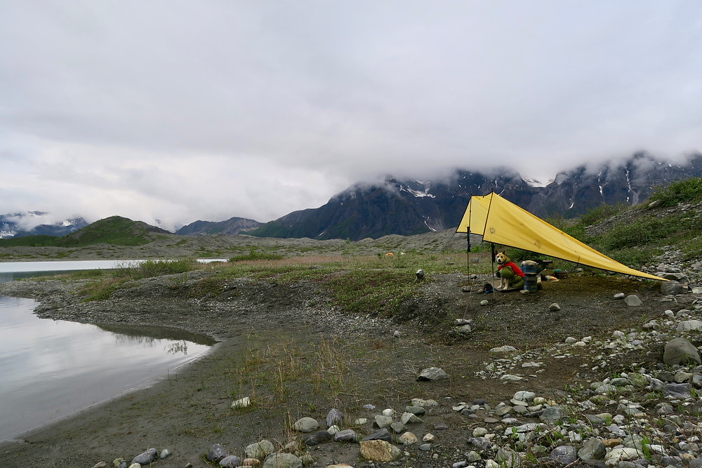 A dog wearing a green quilt and red coat sits under a yellow tarp next to a lake, with white and gray low clouds overhead.