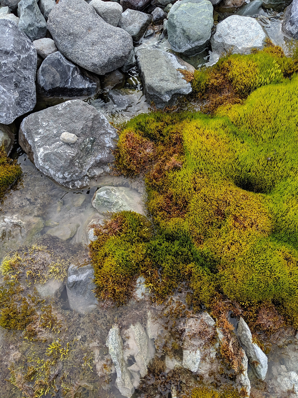 Gray rocks are covered by a puddle and bright green lichen.