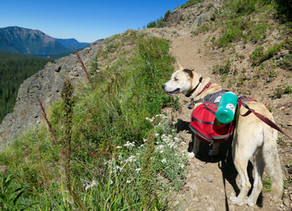 Pacific Crest Trail, Washington (Day 5, August 2016)