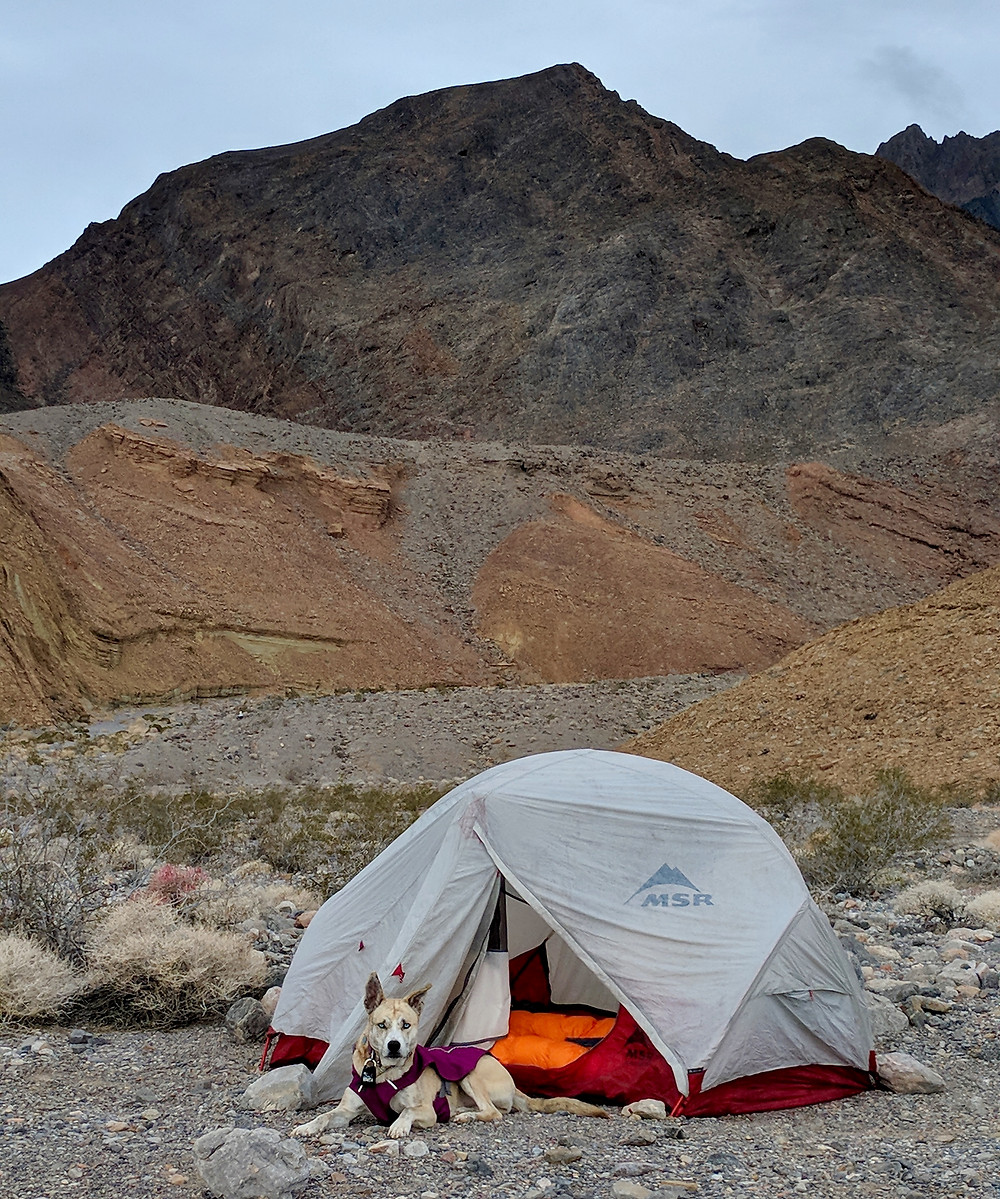 Elu laying down in front of our two-person tent, Funeral Mountains in the background. Photo by Tenley Lozano.
