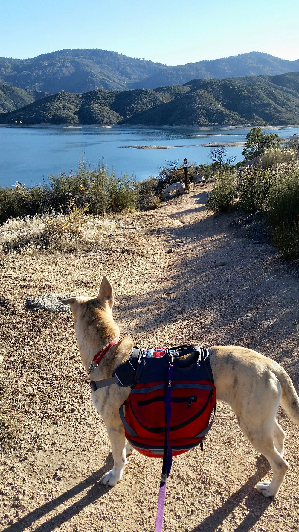 A dog wering a red pack stands on the dirt trail overlooking a sparkling blue lake with rolling green hills in the background.
