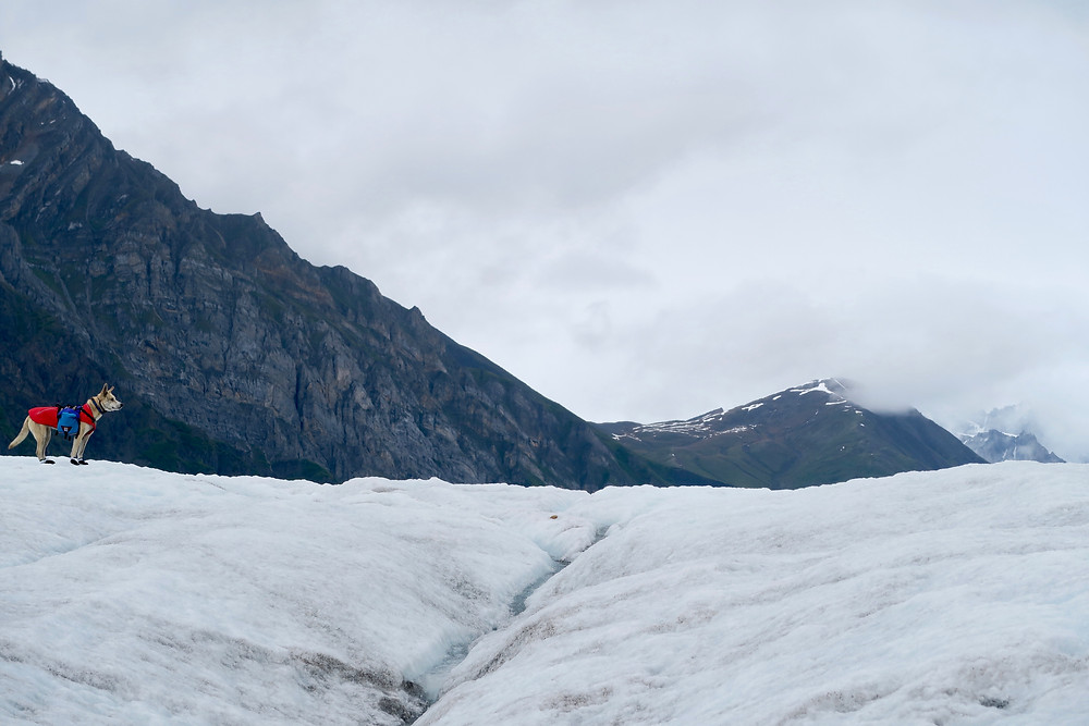 A dog in a red coat stands on an icy white and blue glacier with a rocky mountain in the background.